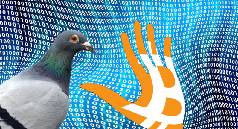 pigeoncoin 796x431 - Hackers exploit Bitcoin inflation bug to print 235M fake Pigeoncoins