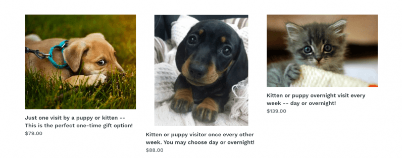 Please don't rent a kitten from this horrible company