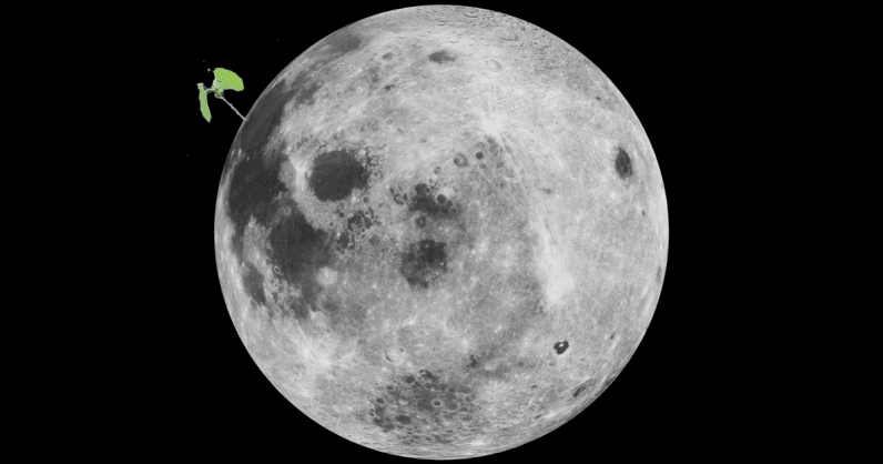 A cotton seed sprouted  and died  on Chinas Lunar Lander