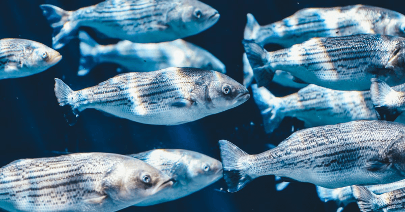 Slimy fish mucus can help chemists develop new antibiotics — here's how