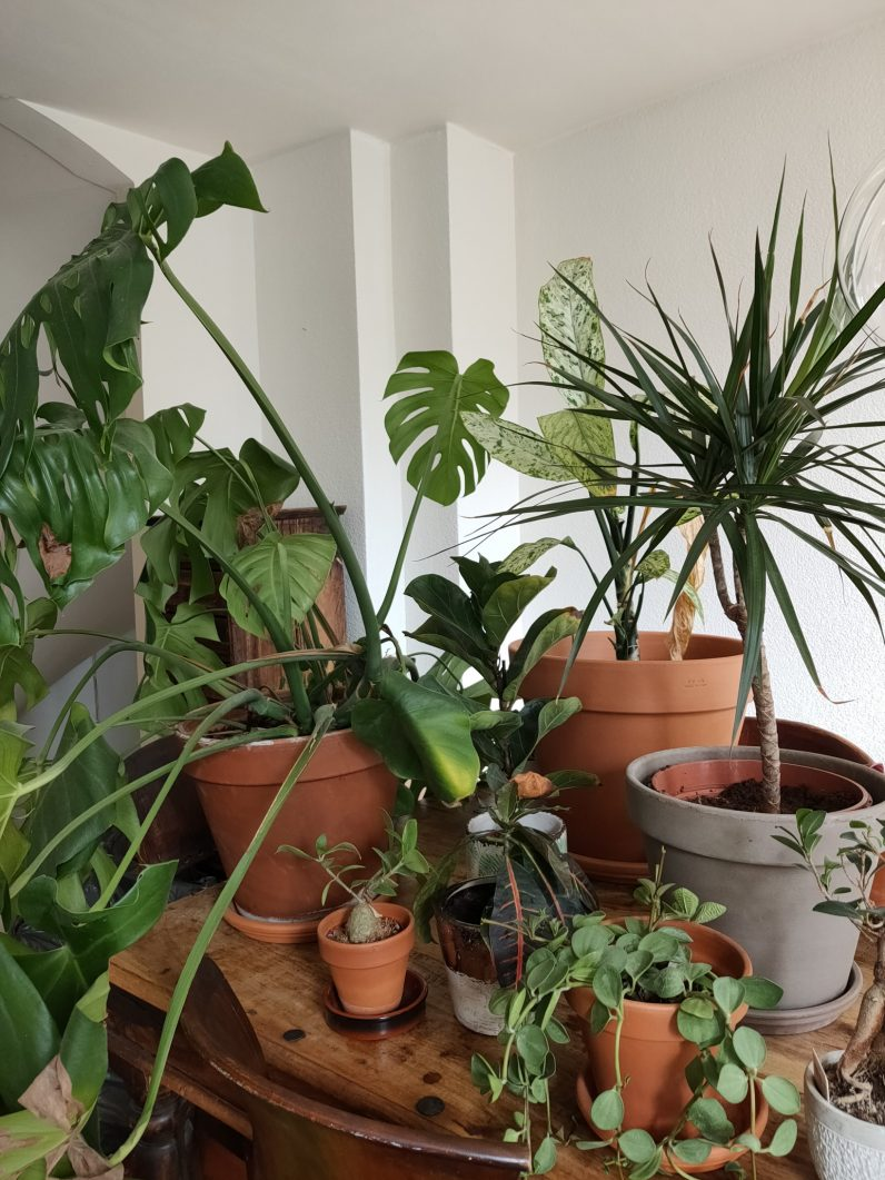 Oppo Reno review shot plants