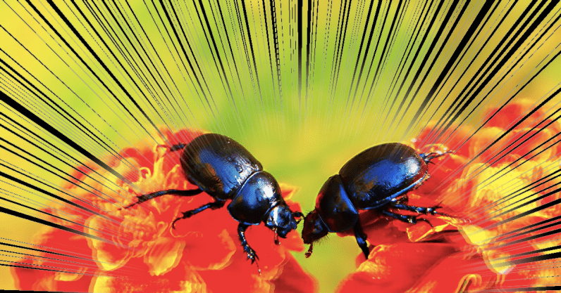 Fighting for sex helps animals survive habitat loss, new beetle research says