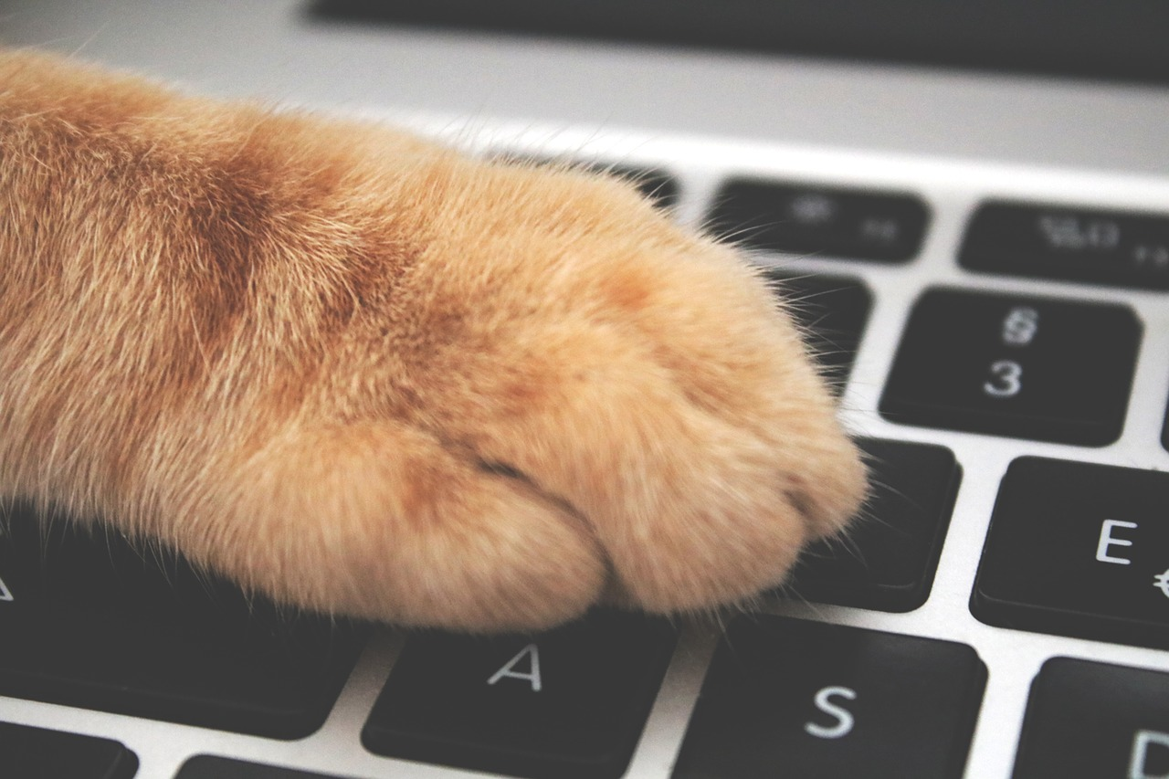 The rise of Pet Tech