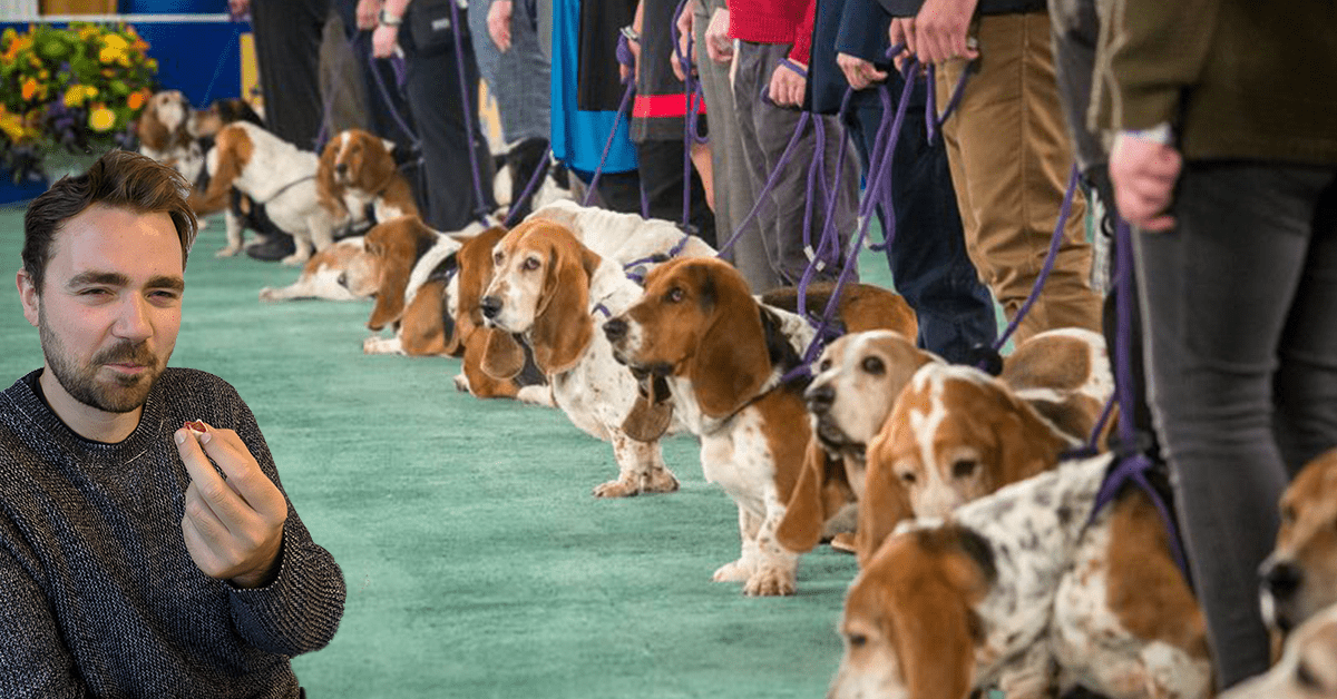 We tested CBD dog treats so your hound didn't have to