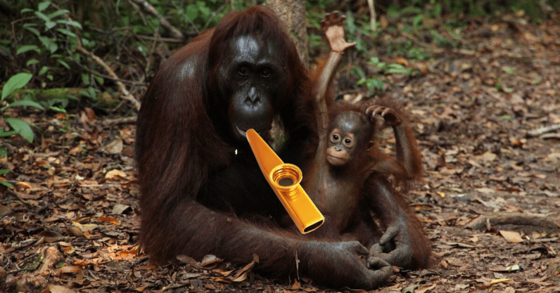Orangutans can play the kazoo – here's what this tells us about speech evolution