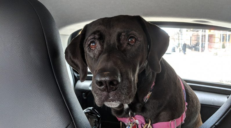 Uber is making it easier to bring pets along for the ride