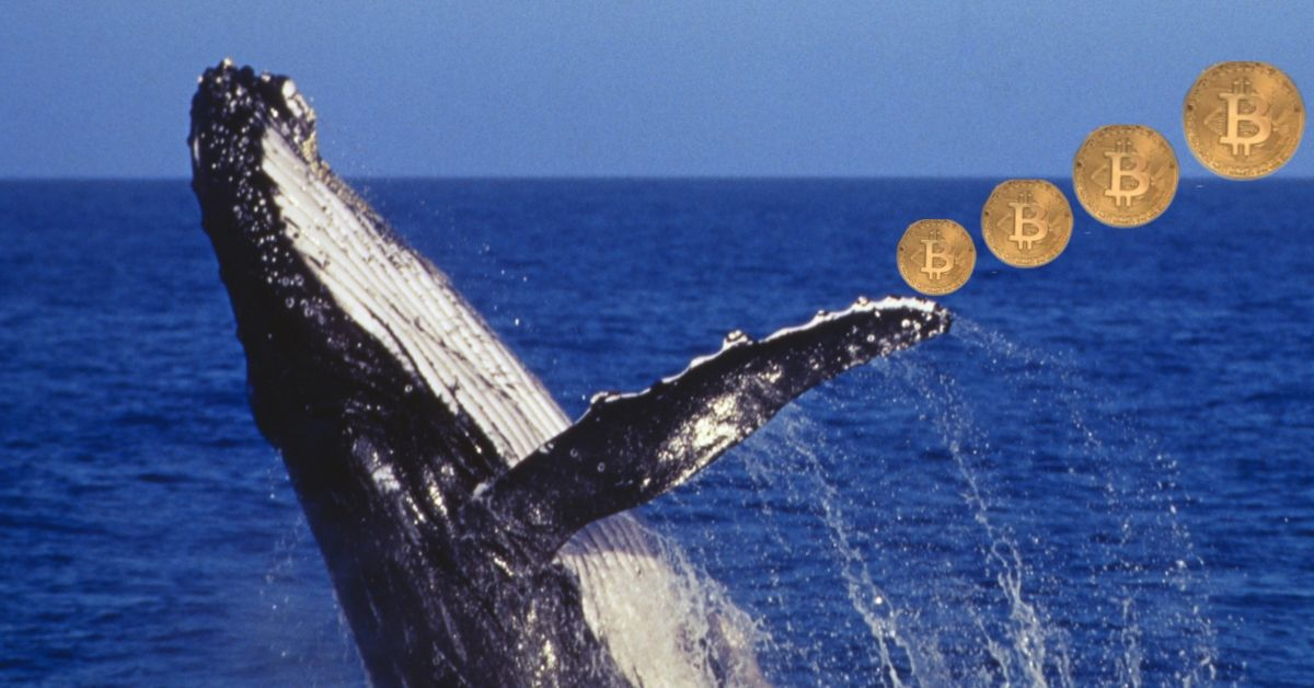 Cryptocurrency Whales