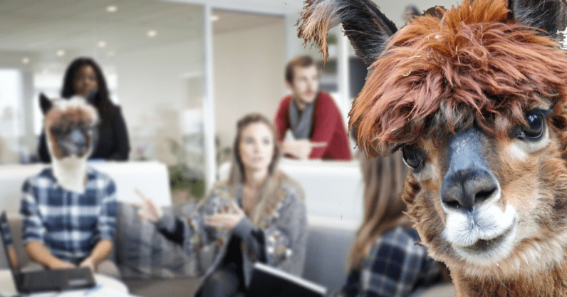 What owning an alpaca farm has taught me about running a tech startup