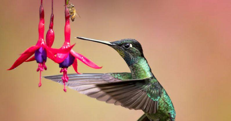 How birds drop 'unnecessary' genes can help us understand evolution