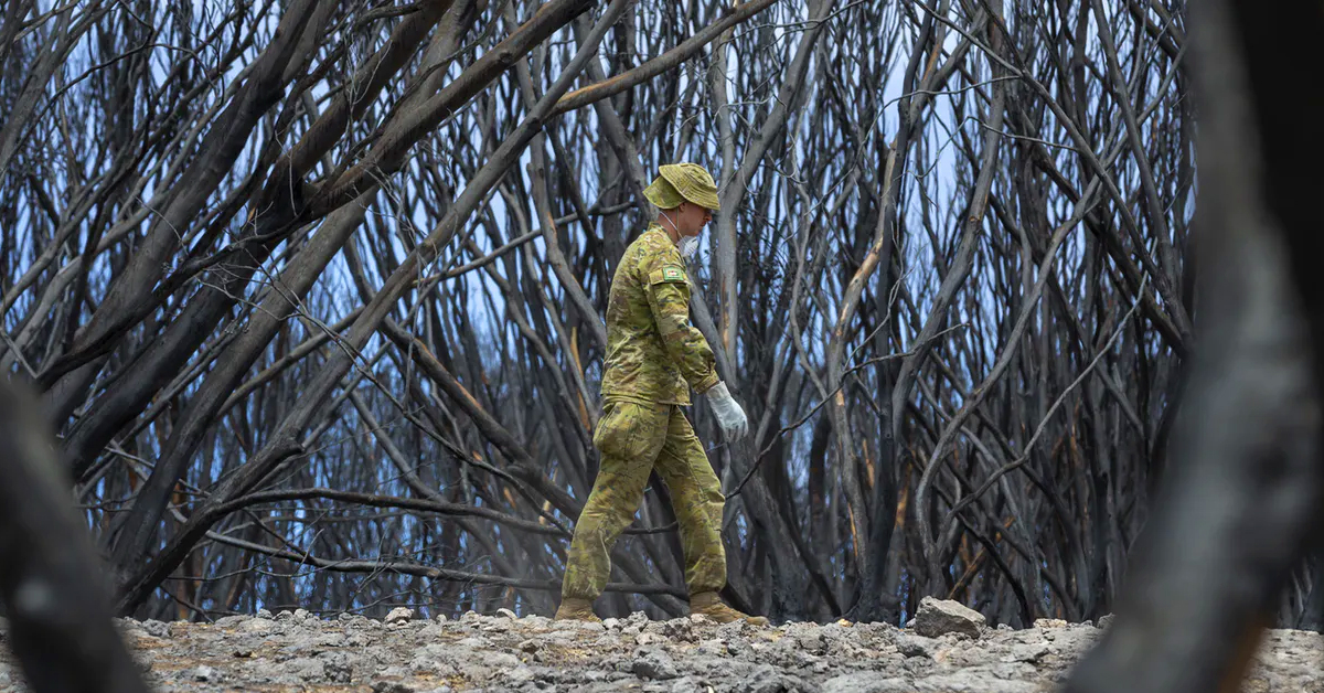 Bushfires: can ecosystems recover from such dramatic losses of biodiversity?