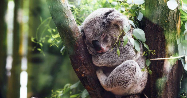 Animals use some wild tricks to survive bushfires