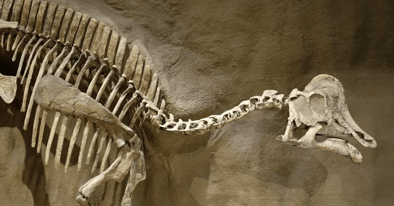 We might've finally found dinosaur DNA, but some scientists don't think it's the real ...