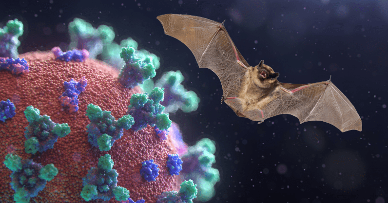 Scientists know coronavirus came from bats, not a lab  heres how
