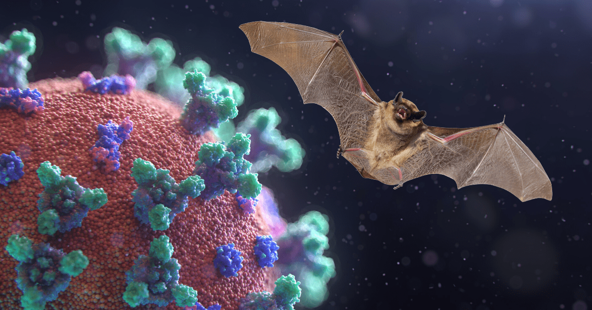 Scientists know coronavirus came from bats, not a lab — here's how