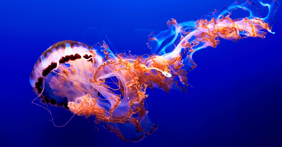 This jellyfish robot can outswim its squishy animal cousin