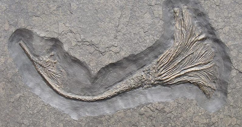 How Jurassic sea creatures spent years crossing oceans on rafts