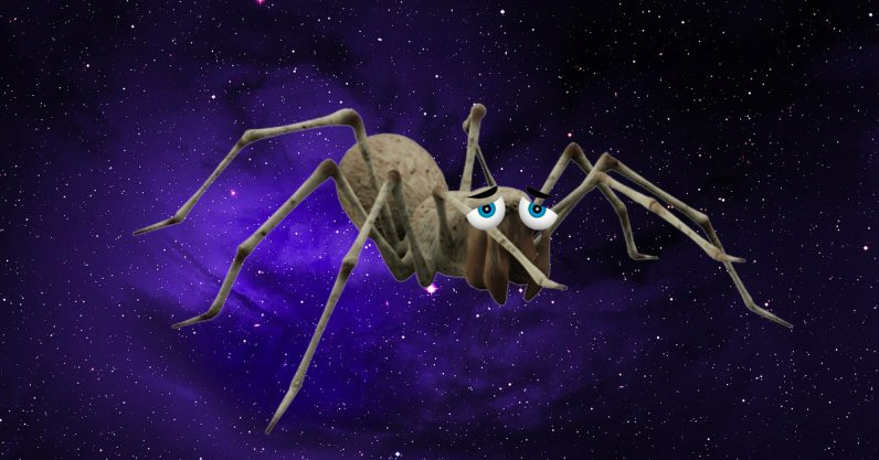 Spiders in space are so unhappy they can't even build decent webs