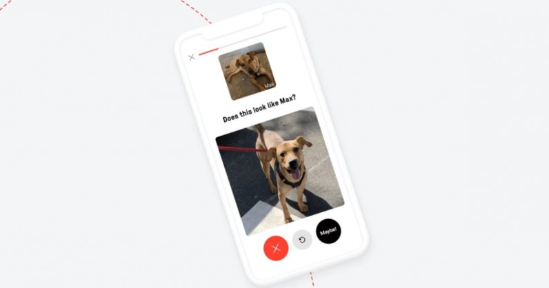 This app is helping reunite dogs with their owners using AI
