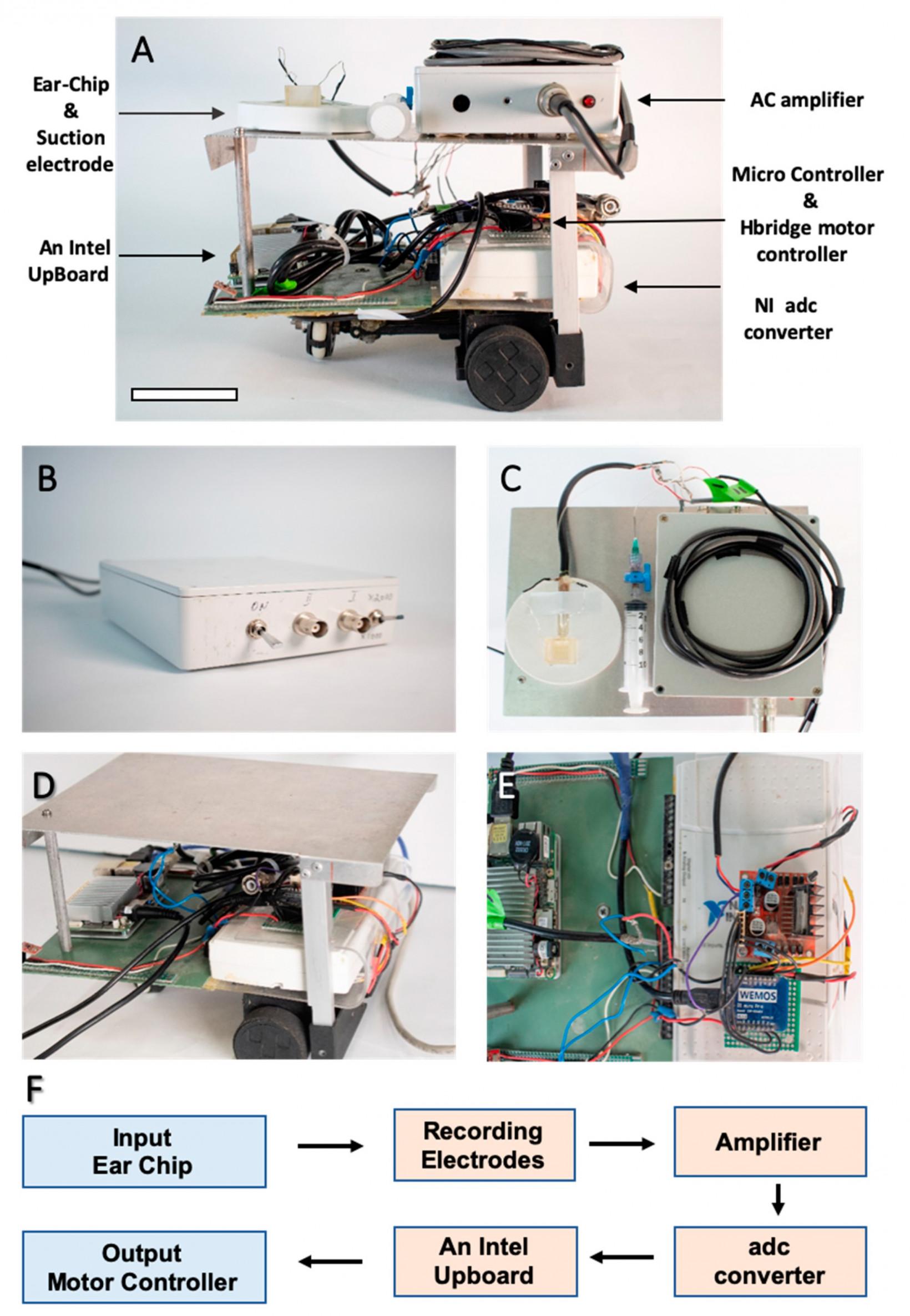 Scientists built a robot that can hear through a dead locust's ear