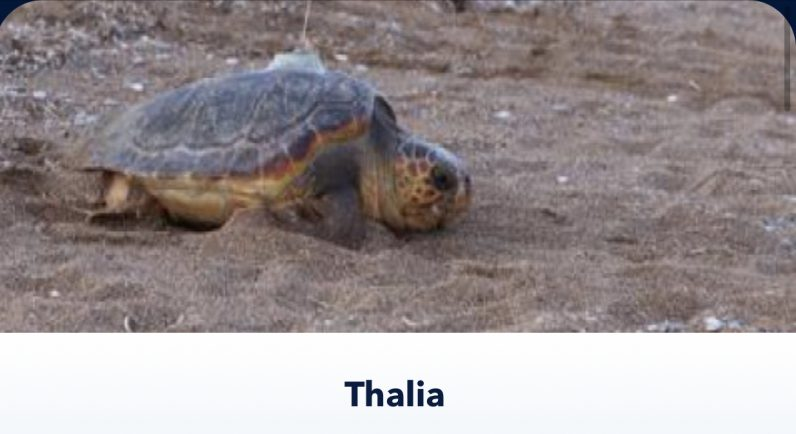 Thalia OCEARCH shark tracking app