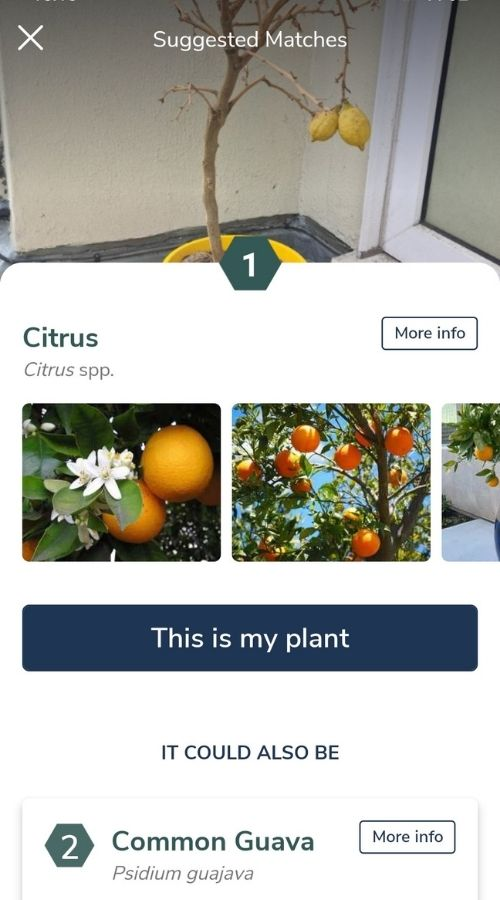 Candide's Plant ID provides information on plants you photograph.
