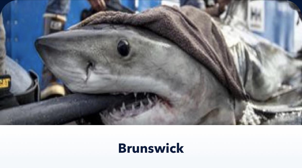 brunswick shark tracker app