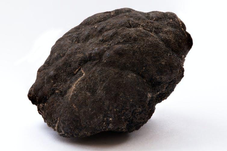 A dark, gnarled piece of rock.